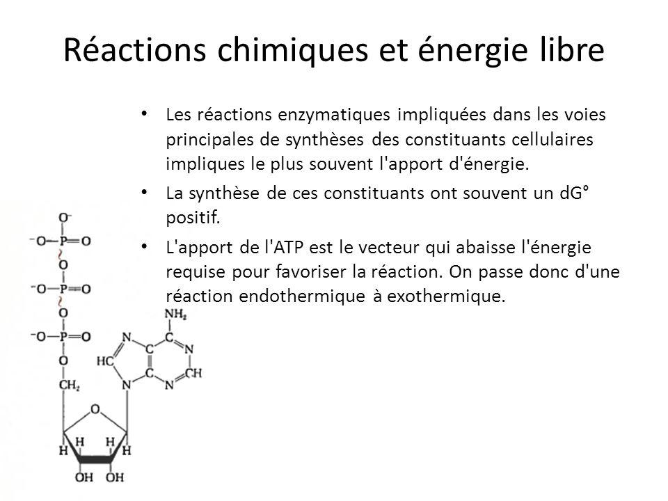 Réactions chimiques et énergie libre Les réactions enzymatiques impliquées dans les voies principales de synthèses des constituants cellulaires impliq