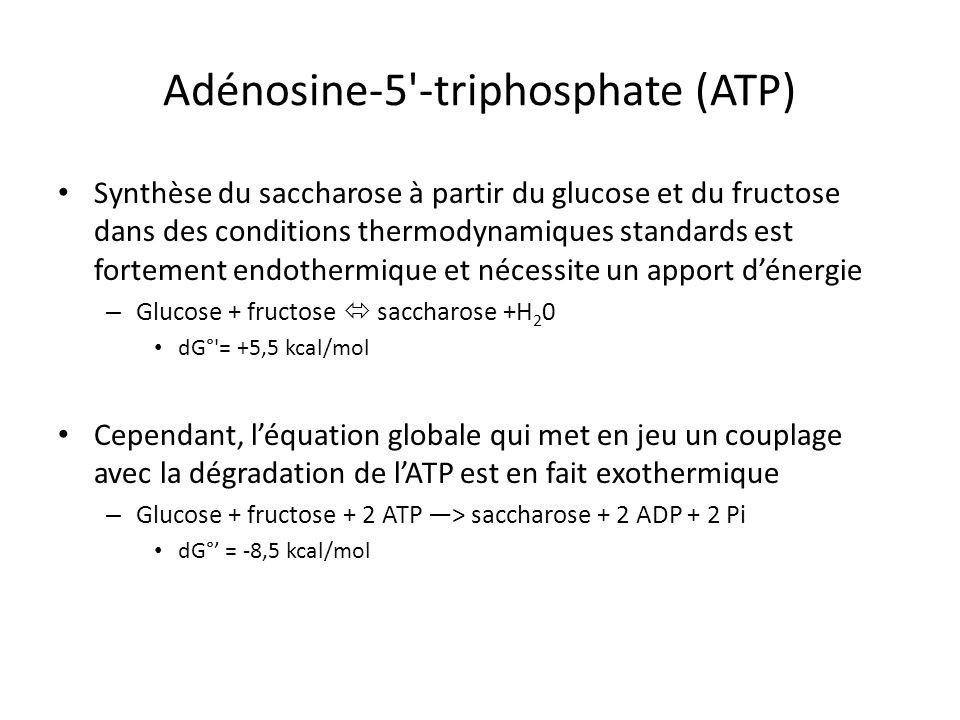 Adénosine-5'-triphosphate (ATP) Synthèse du saccharose à partir du glucose et du fructose dans des conditions thermodynamiques standards est fortement