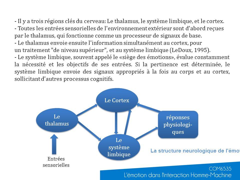 Entrées sensorielles - Il y a trois régions clés du cerveau: Le thalamus, le système limbique, et le cortex. - Toutes les entrées sensorielles de l'en