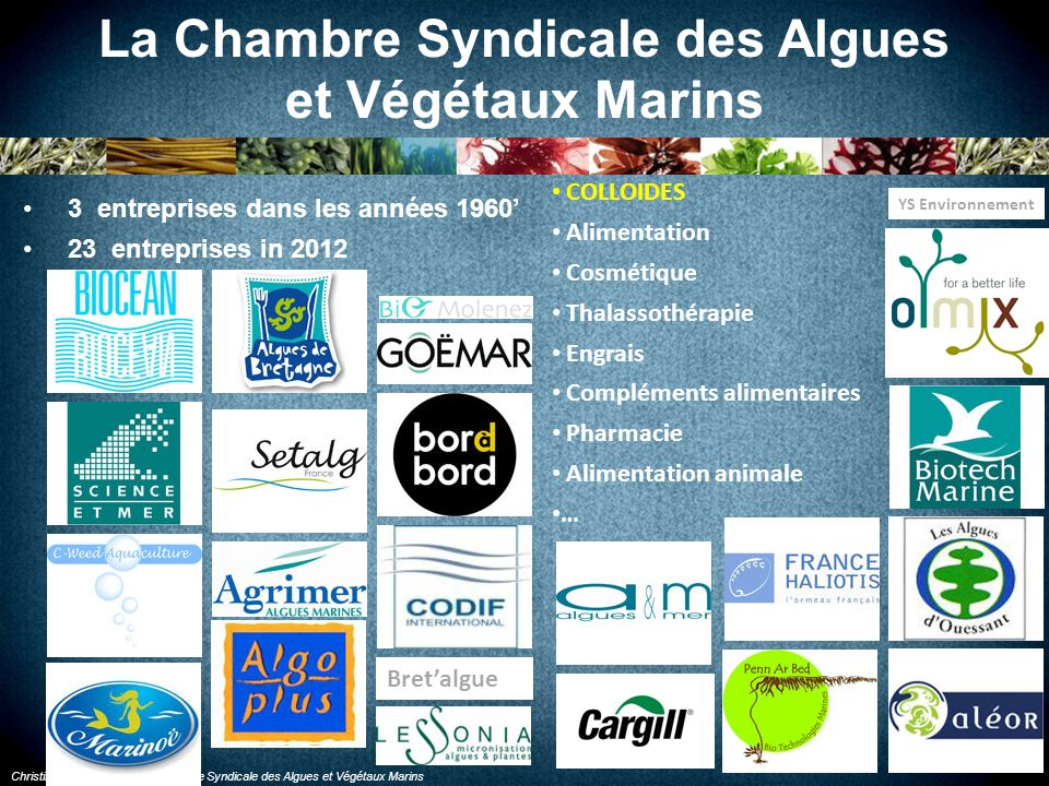 Christine BODEAU, pour la Chambre Syndicale des Algues et Végétaux Marins La pêche des algues en mer En 2012 : Laminaria digitata : 55 000 t Laminaria hyperborea : 12 000 t pêchées en Bretagne