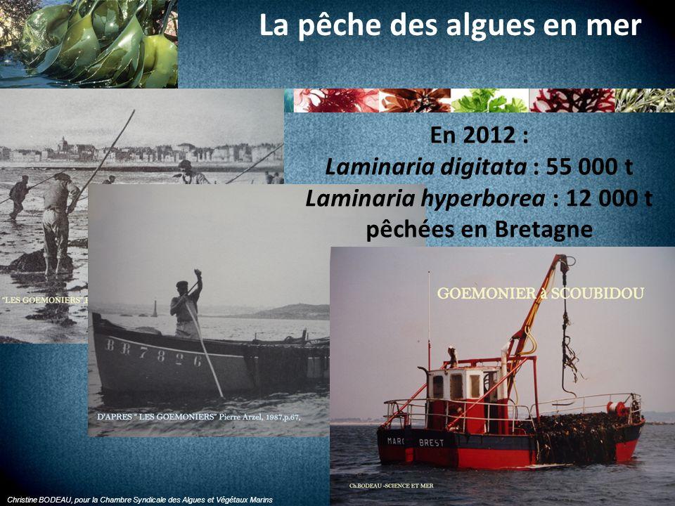 Christine BODEAU, pour la Chambre Syndicale des Algues et Végétaux Marins La récolte à pied des algues de rive En 2012 : 8 000 t dalgues de rive récoltées en Bretagne