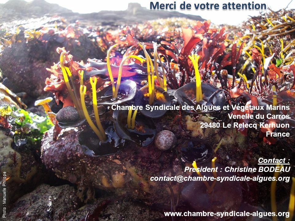Merci de votre attention Chambre Syndicale des Algues et Végétaux Marins Venelle du Carros 29480 Le Relecq Kerhuon France Contact : President : Christ