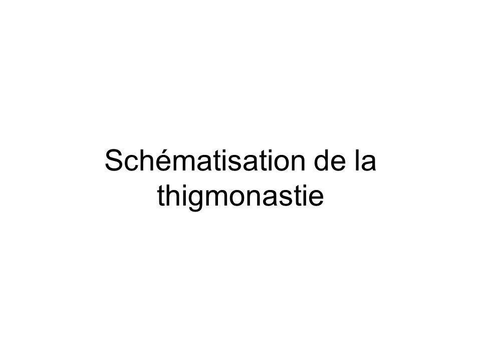 Schématisation de la thigmonastie