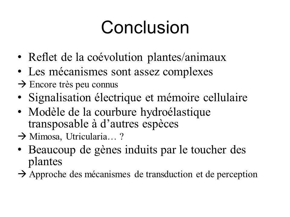 Conclusion Reflet de la coévolution plantes/animaux Les mécanismes sont assez complexes Encore très peu connus Signalisation électrique et mémoire cellulaire Modèle de la courbure hydroélastique transposable à dautres espèces Mimosa, Utricularia… .