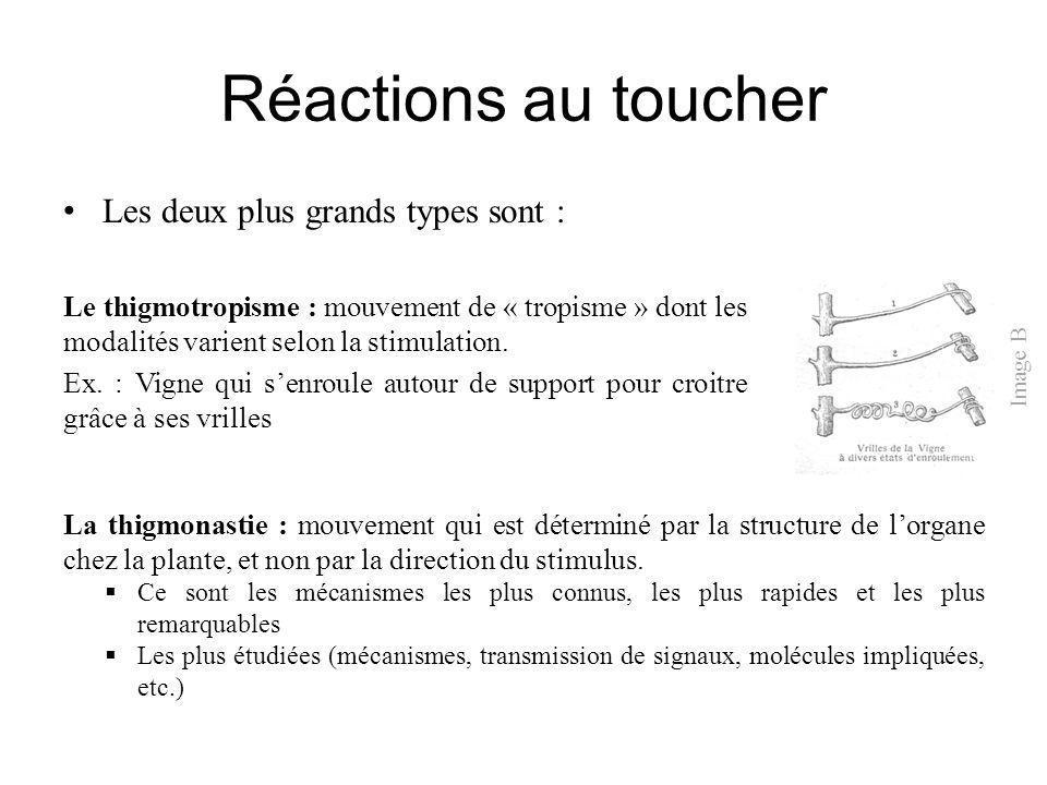 Réactions au toucher Les deux plus grands types sont : Le thigmotropisme : mouvement de « tropisme » dont les modalités varient selon la stimulation.