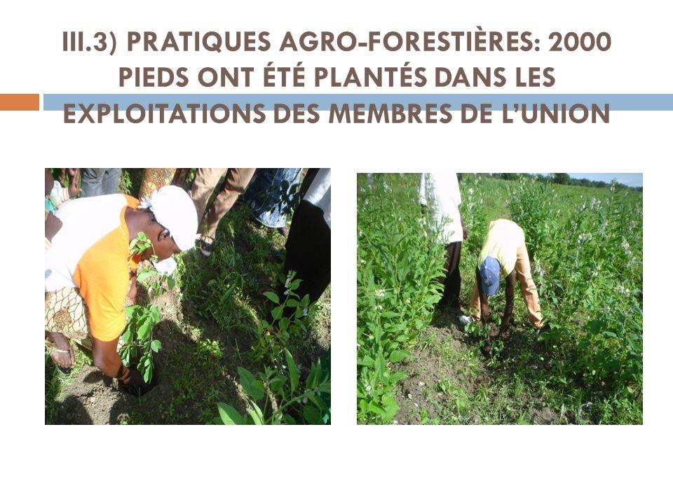 III.3) PRATIQUES AGRO-FORESTIÈRES: 2000 PIEDS ONT ÉTÉ PLANTÉS DANS LES EXPLOITATIONS DES MEMBRES DE LUNION