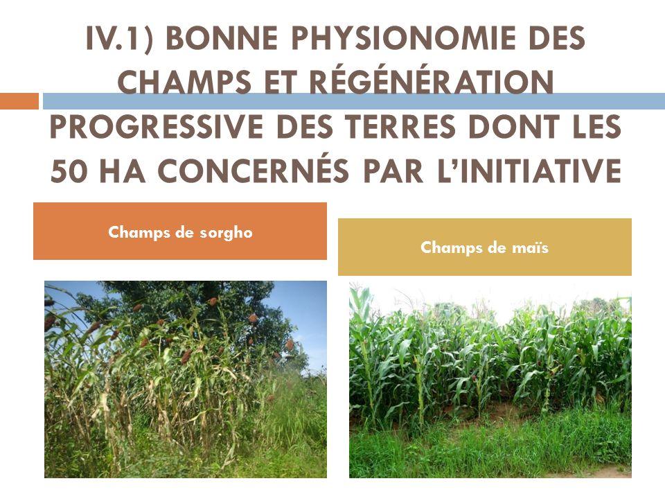 IV.1) BONNE PHYSIONOMIE DES CHAMPS ET RÉGÉNÉRATION PROGRESSIVE DES TERRES DONT LES 50 HA CONCERNÉS PAR LINITIATIVE Champs de sorgho Champs de maïs