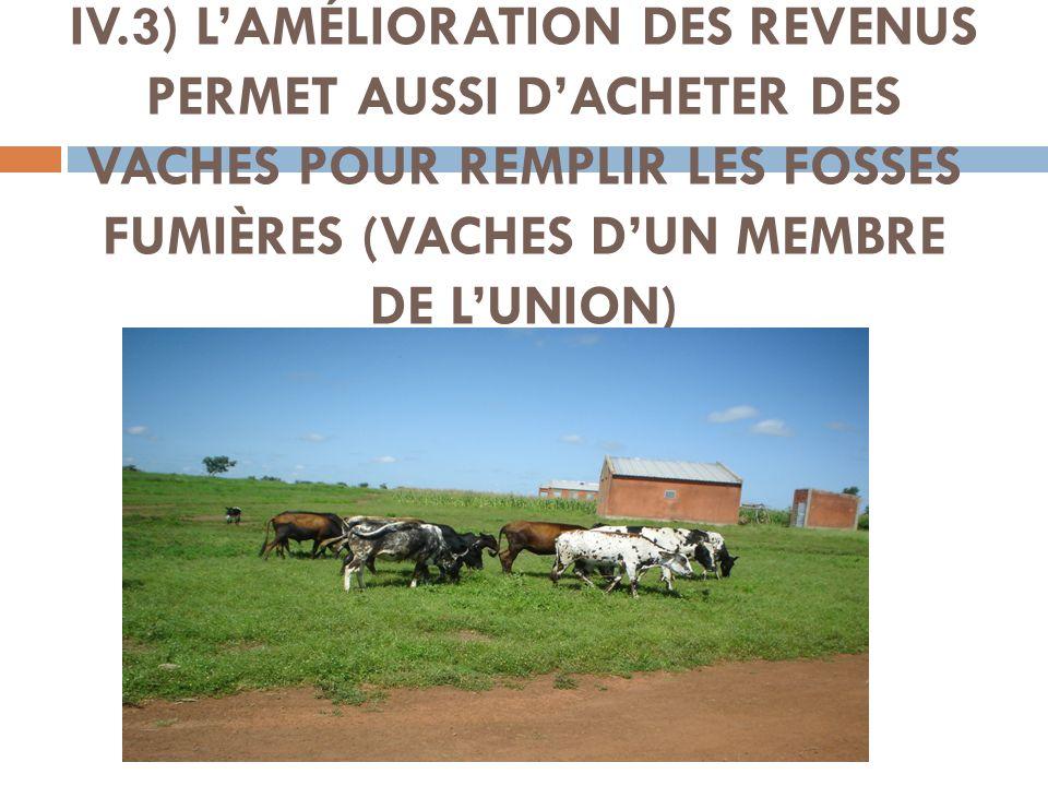 IV.3) LAMÉLIORATION DES REVENUS PERMET AUSSI DACHETER DES VACHES POUR REMPLIR LES FOSSES FUMIÈRES (VACHES DUN MEMBRE DE LUNION)