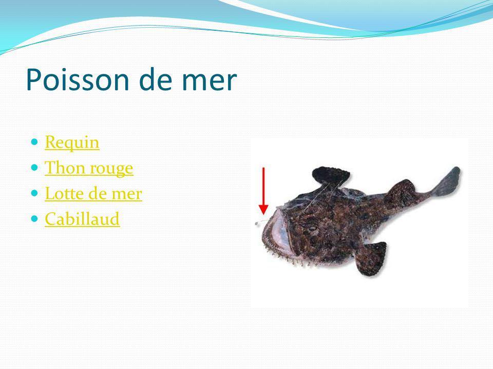 Poisson de mer Requin Thon rouge Lotte de mer Cabillaud