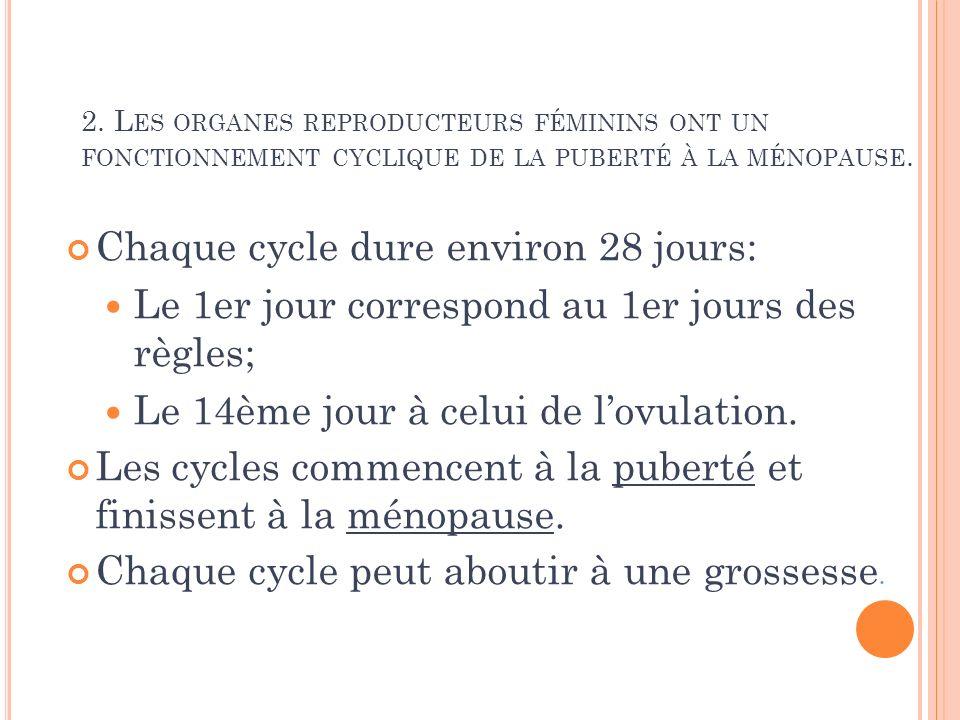 L A SYNCHRONISATION DES CYCLES EST CONTRÔLÉE PAR LA RÉGULATION HORMONALE
