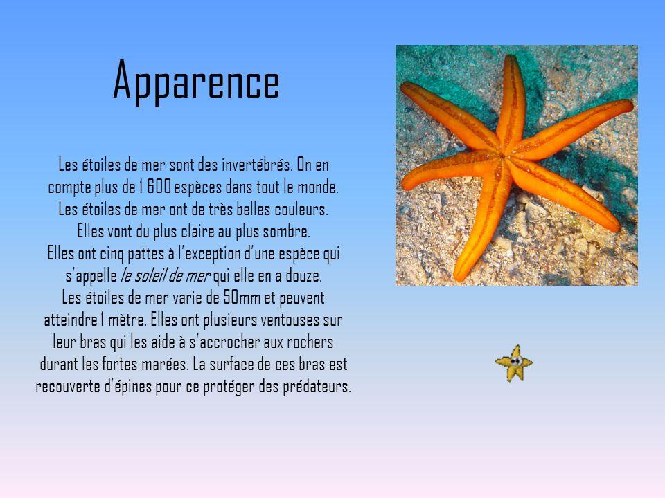 Apparence Les étoiles de mer sont des invertébrés. On en compte plus de 1 600 espèces dans tout le monde. Les étoiles de mer ont de très belles couleu
