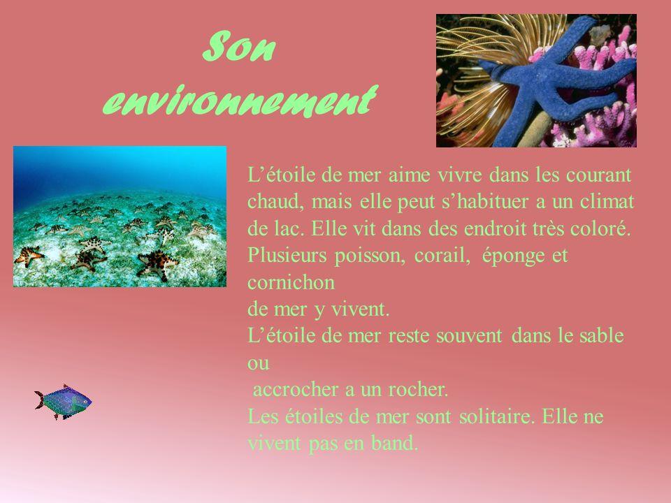 Son environnement Létoile de mer aime vivre dans les courant chaud, mais elle peut shabituer a un climat de lac. Elle vit dans des endroit très coloré