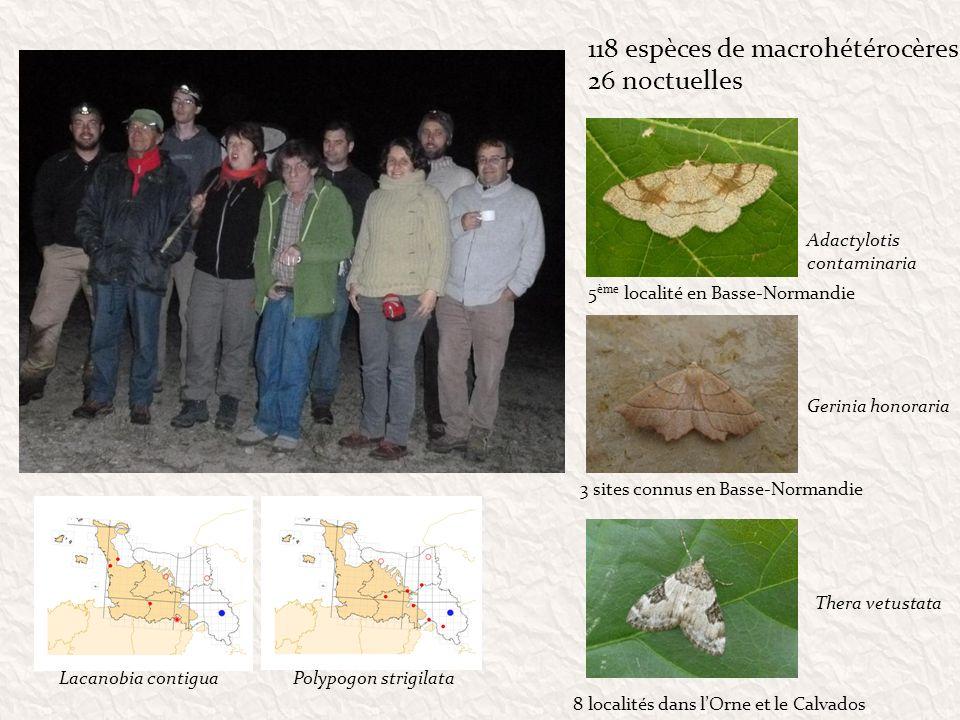 118 espèces de macrohétérocères 26 noctuelles Lacanobia contiguaPolypogon strigilata Adactylotis contaminaria Gerinia honoraria Thera vetustata 5 ème