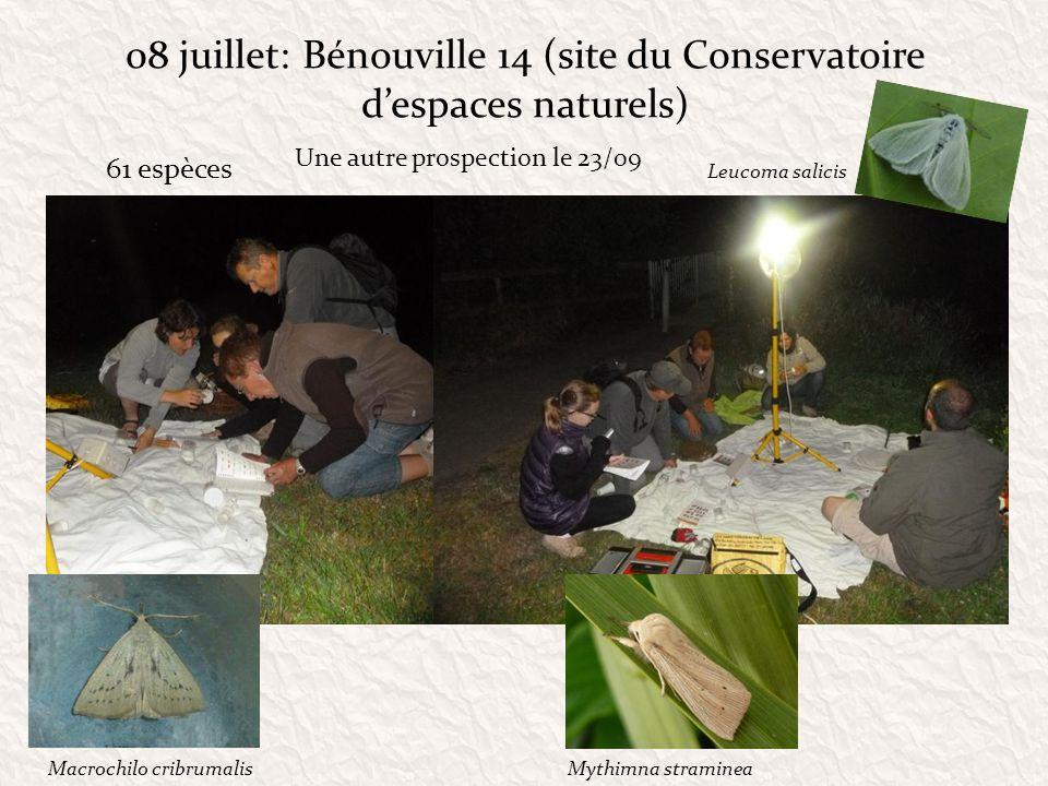 08 juillet: Bénouville 14 (site du Conservatoire despaces naturels) 61 espèces Leucoma salicis Une autre prospection le 23/09 Macrochilo cribrumalisMy