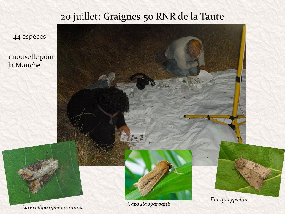 20 juillet: Graignes 50 RNR de la Taute 44 espèces Lateroligia ophiogramma Enargia ypsilon Capsula sparganii 1 nouvelle pour la Manche