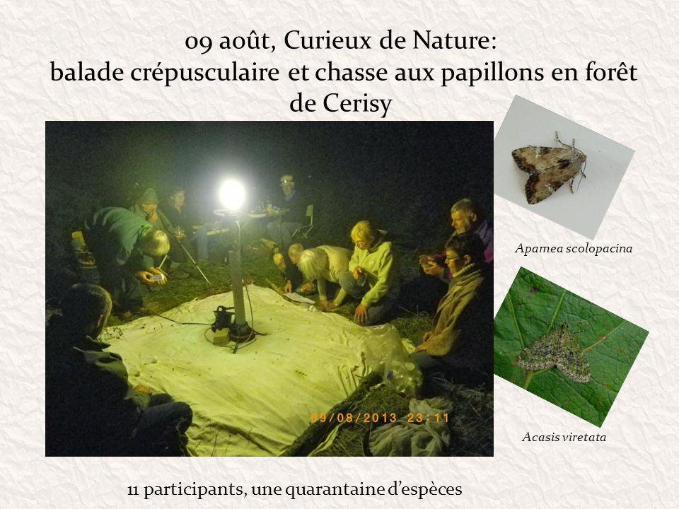 09 août, Curieux de Nature: balade crépusculaire et chasse aux papillons en forêt de Cerisy 11 participants, une quarantaine despèces Apamea scolopaci