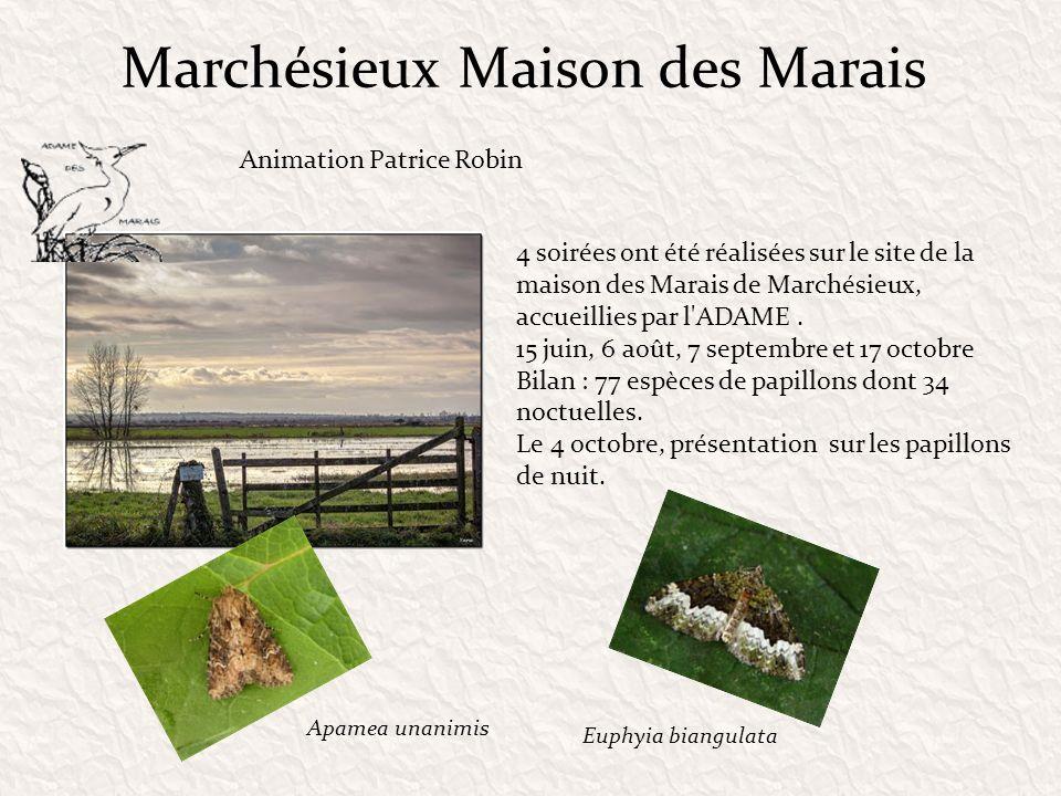 Marchésieux Maison des Marais 4 soirées ont été réalisées sur le site de la maison des Marais de Marchésieux, accueillies par l'ADAME. 15 juin, 6 août