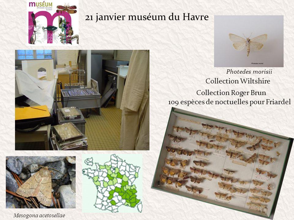 21 janvier muséum du Havre Collection Roger Brun Collection Wiltshire 109 espèces de noctuelles pour Friardel Photedes morisii Mesogona acetosellae