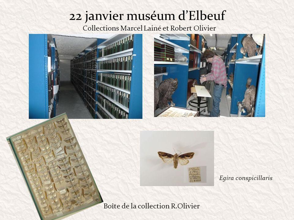 22 janvier muséum dElbeuf Collections Marcel Lainé et Robert Olivier Egira conspicillaris Boîte de la collection R.Olivier