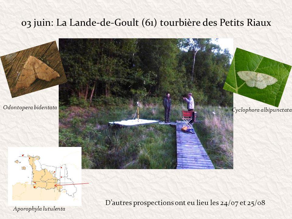 03 juin: La Lande-de-Goult (61) tourbière des Petits Riaux Odontopera bidentata Cyclophora albipunctata Dautres prospections ont eu lieu les 24/07 et