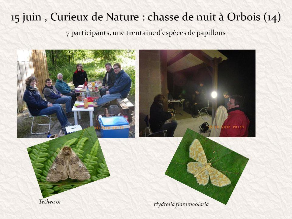 24 août La Chapelle St-Antoine/ ENS des Gorges de Villiers (61) Animation Sylvain Montagner et Julien Crocis