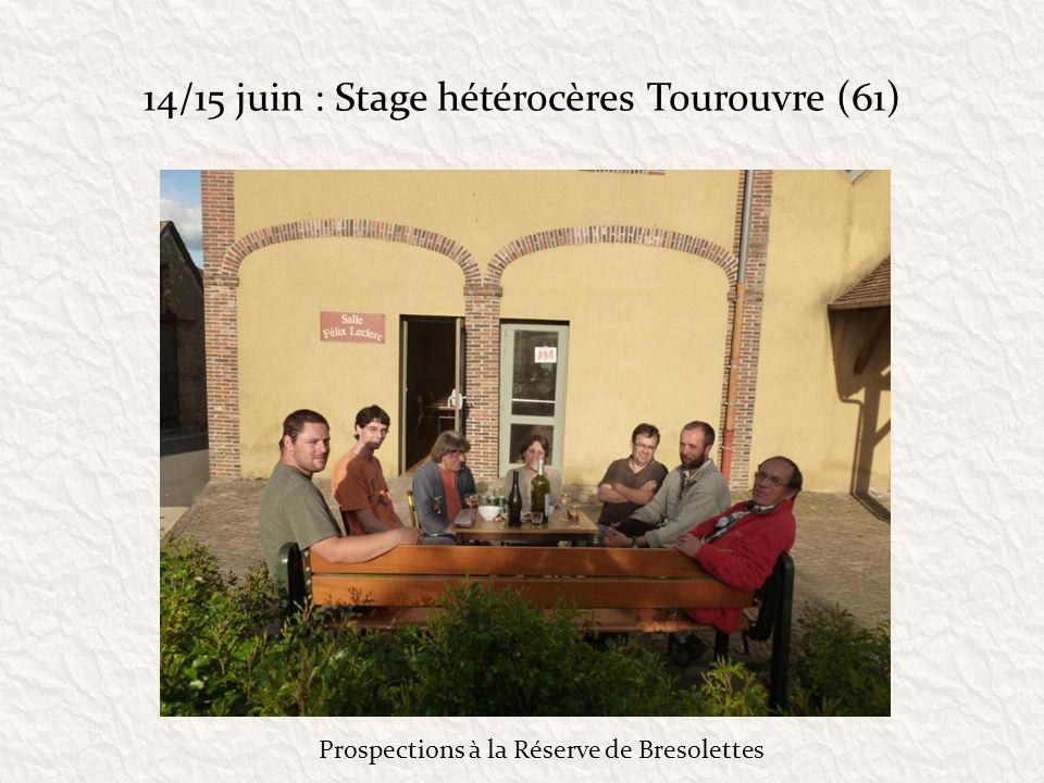 14/15 juin : Stage hétérocères Tourouvre (61) Prospections à la Réserve de Bresolettes