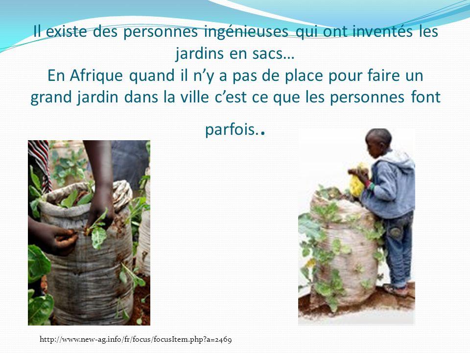 Il existe des personnes ingénieuses qui ont inventés les jardins en sacs… En Afrique quand il ny a pas de place pour faire un grand jardin dans la ville cest ce que les personnes font parfois..