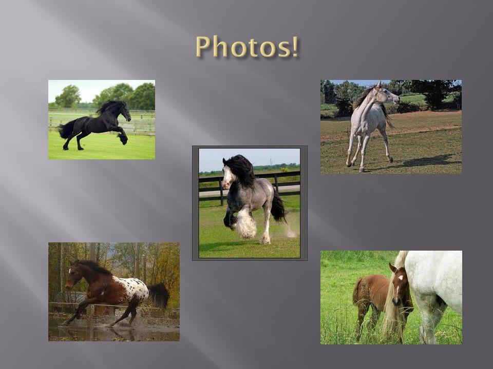 « Chasse le naturel, il revient au galop » Un cheval nest pas une machine,même si vous avez le compagnon le plus sympa du monde.
