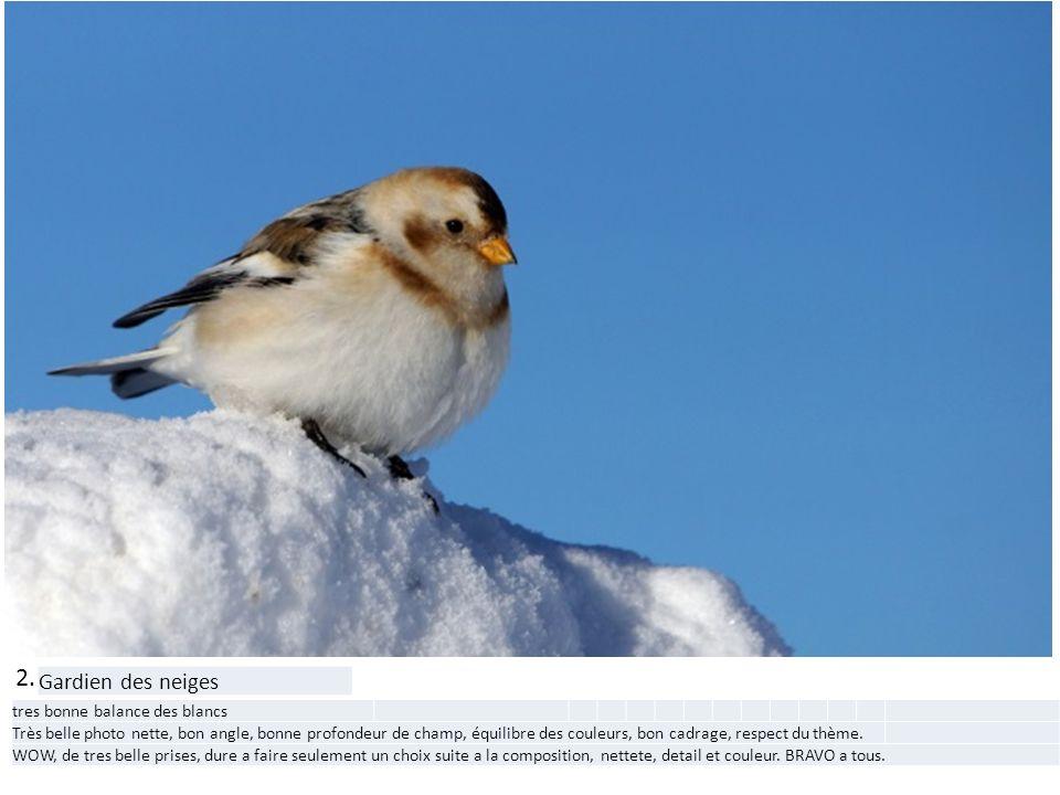 2. Gardien des neiges tres bonne balance des blancs Très belle photo nette, bon angle, bonne profondeur de champ, équilibre des couleurs, bon cadrage,