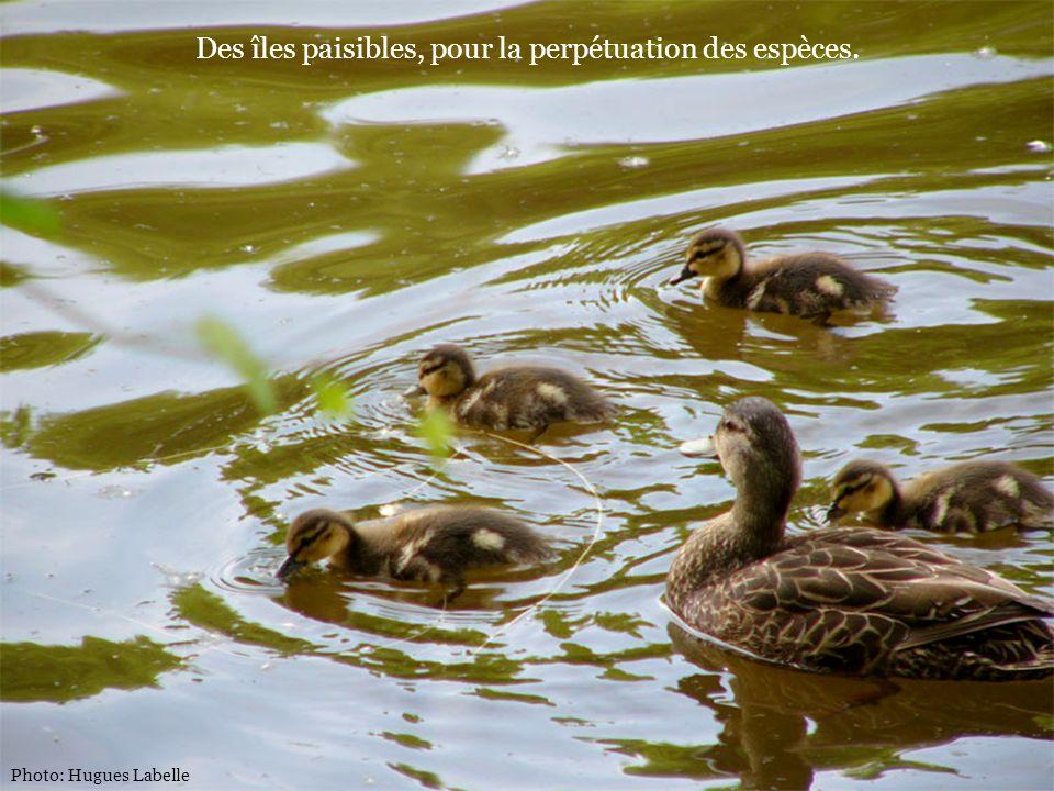 Photo: Hugues Labelle Des îles paisibles, pour la perpétuation des espèces.