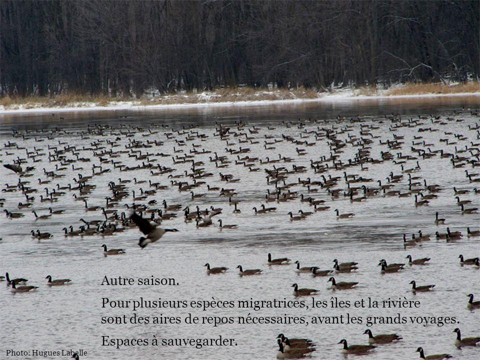 Autre saison. Pour plusieurs espèces migratrices, les îles et la rivière sont des aires de repos nécessaires, avant les grands voyages. Espaces à sauv