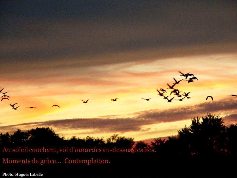 Au soleil couchant, vol d'outardes au-dessus des îles. Moments de grâce… Contemplation.