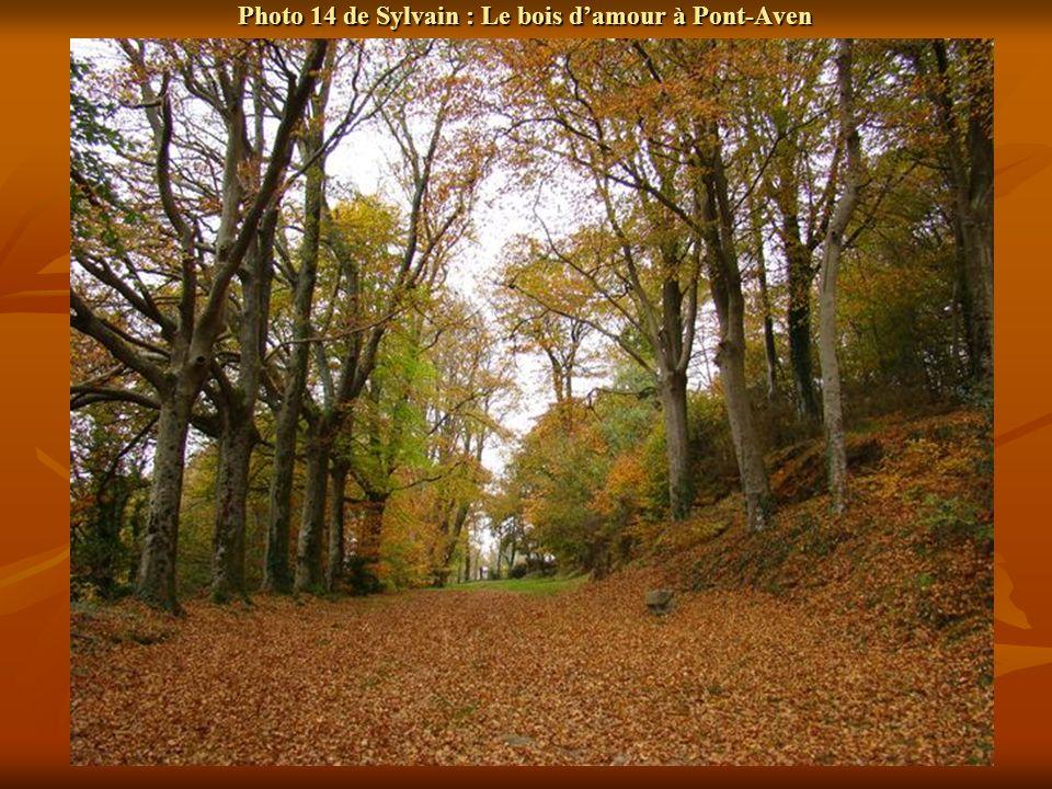 Photo 14 de Sylvain : Le bois damour à Pont-Aven
