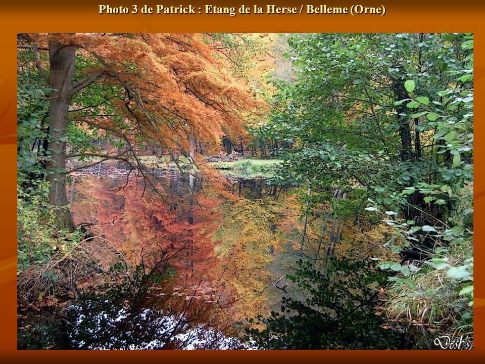 Photo 3 de Patrick : Etang de la Herse / Belleme (Orne)