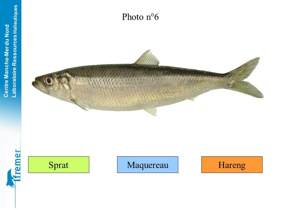 Centre Manche-Mer du Nord Laboratoire Ressources Halieutiques La sole commune Cest lun des poissons les plus fins (et les plus chers) très apprécié po