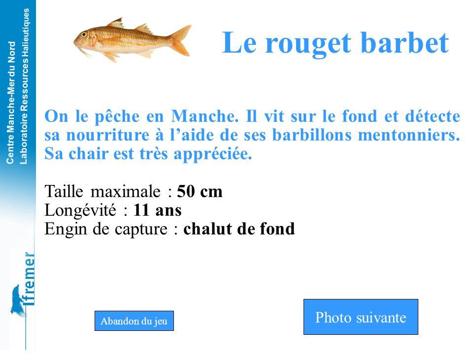 Centre Manche-Mer du Nord Laboratoire Ressources Halieutiques Rouget-barbetTacaudGrondin rouge Photo n°10