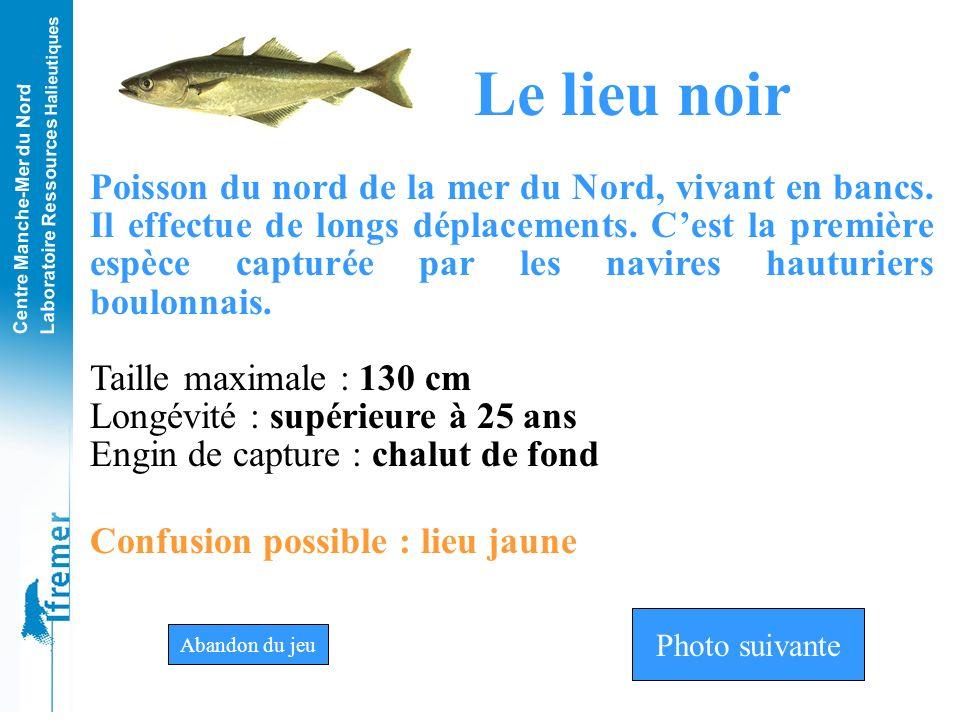 Centre Manche-Mer du Nord Laboratoire Ressources Halieutiques Lieu jauneLieu noirThon noir Photo n°11