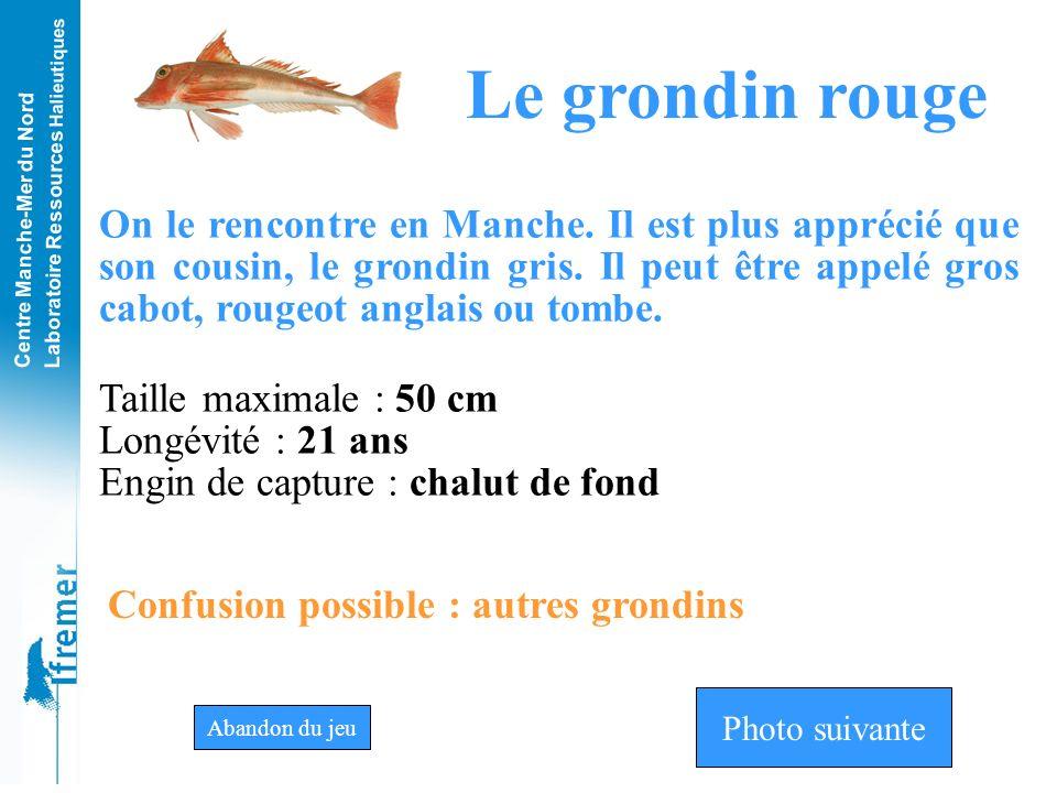 Centre Manche-Mer du Nord Laboratoire Ressources Halieutiques Grondin grisGrondin rougeGrondin perlon Photo n°13