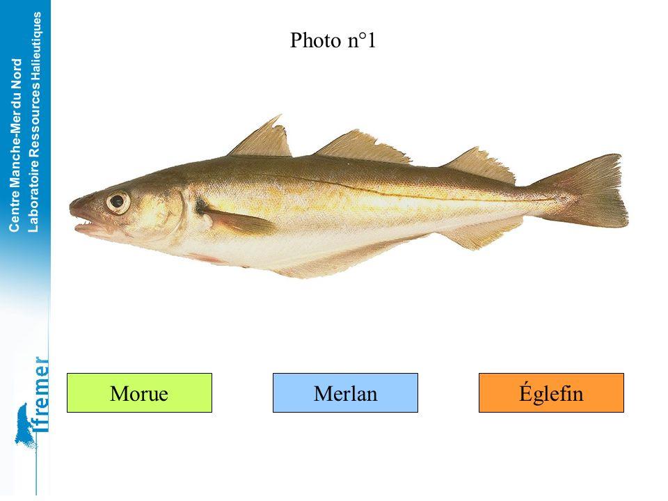 Centre Manche-Mer du Nord Laboratoire Ressources Halieutiques Ce jeu est composé de 20 photos de poissons de Manche et de Mer du Nord. Pour chacune de