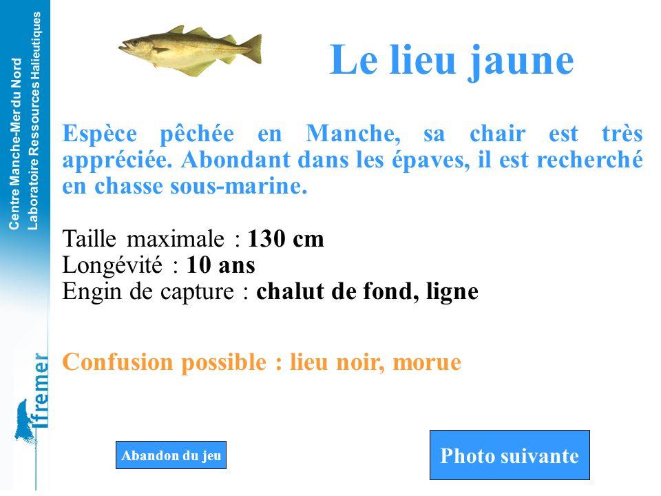 Centre Manche-Mer du Nord Laboratoire Ressources Halieutiques Lieu noirLieu jauneThon commun Photo n°19