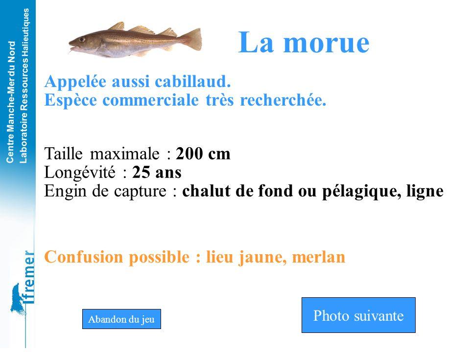 Centre Manche-Mer du Nord Laboratoire Ressources Halieutiques MorueMerluLieu jaune Photo n°3