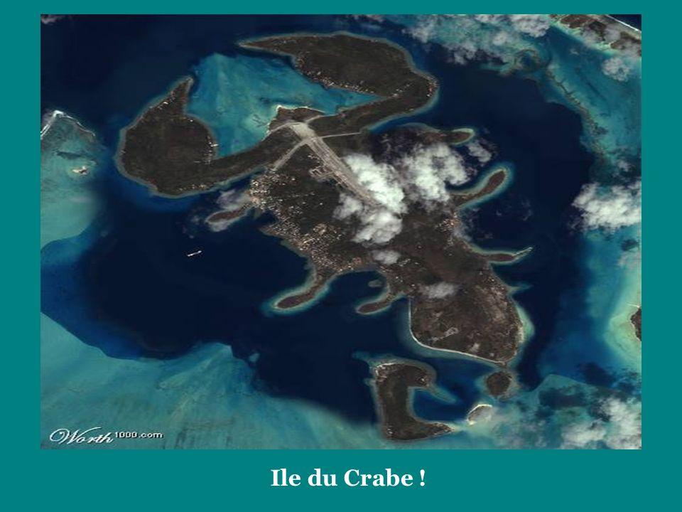 Ile du Crabe !