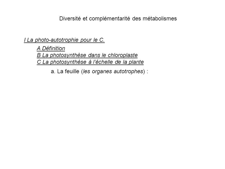 Diversité et complémentarité des métabolismes I La photo-autotrophie pour le C. A Définition B La photosynthèse dans le chloroplaste C La photosynthès