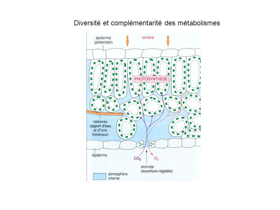 Diversité et complémentarité des métabolismes