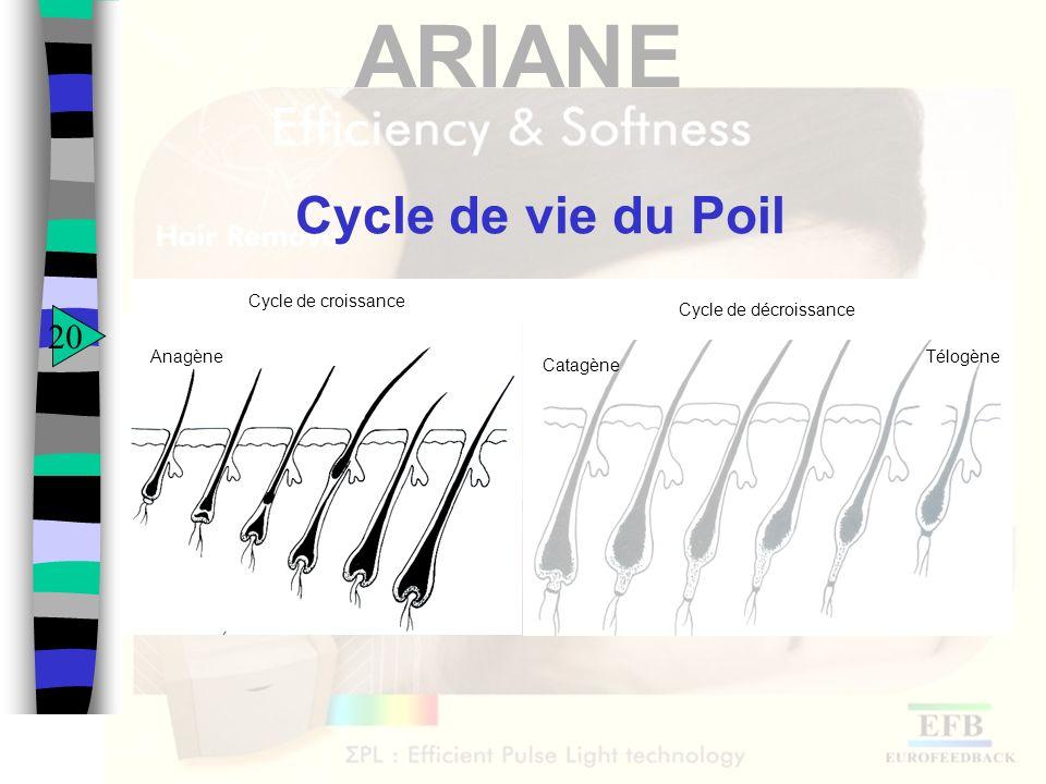 ARIANE Cycle de vie du Poil 20 Cycle de décroissance Catagène TélogèneAnagène Cycle de croissance