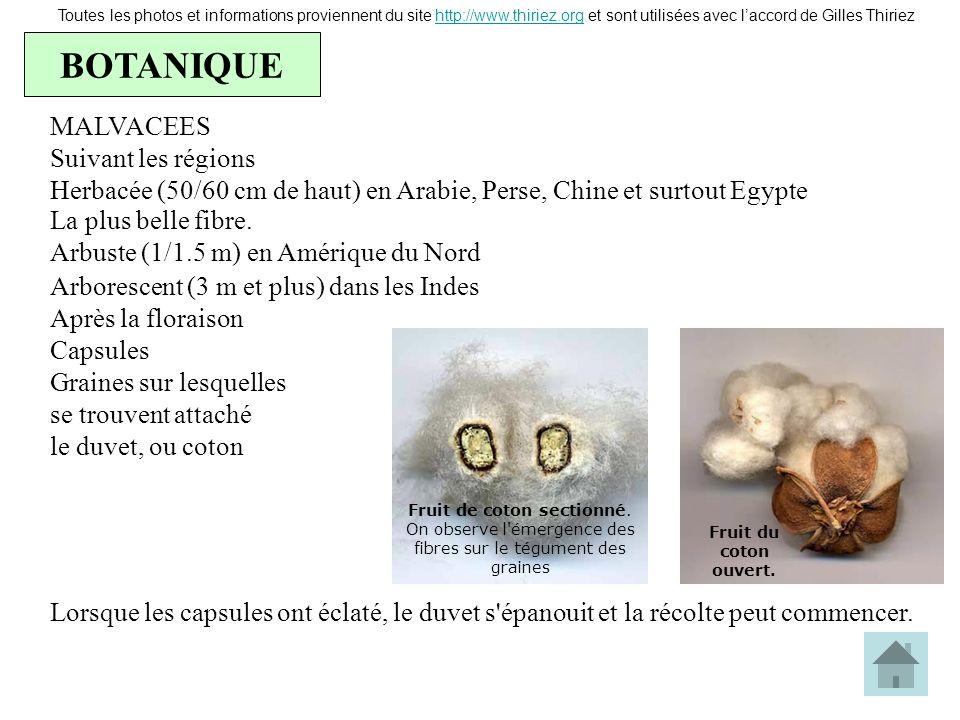 BOTANIQUE Toutes les photos et informations proviennent du site http://www.thiriez.org et sont utilisées avec laccord de Gilles Thiriezhttp://www.thir