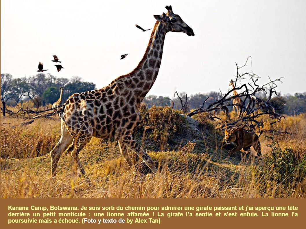 Une fois de plus, National Geographic maintient son Concours Photographique Annuel, comme date finale, le 30 Novembre.