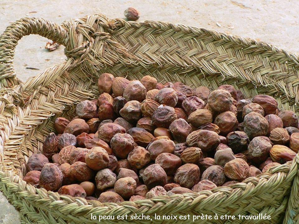 procédés traditionnels pour l huile d argan traditionnelle