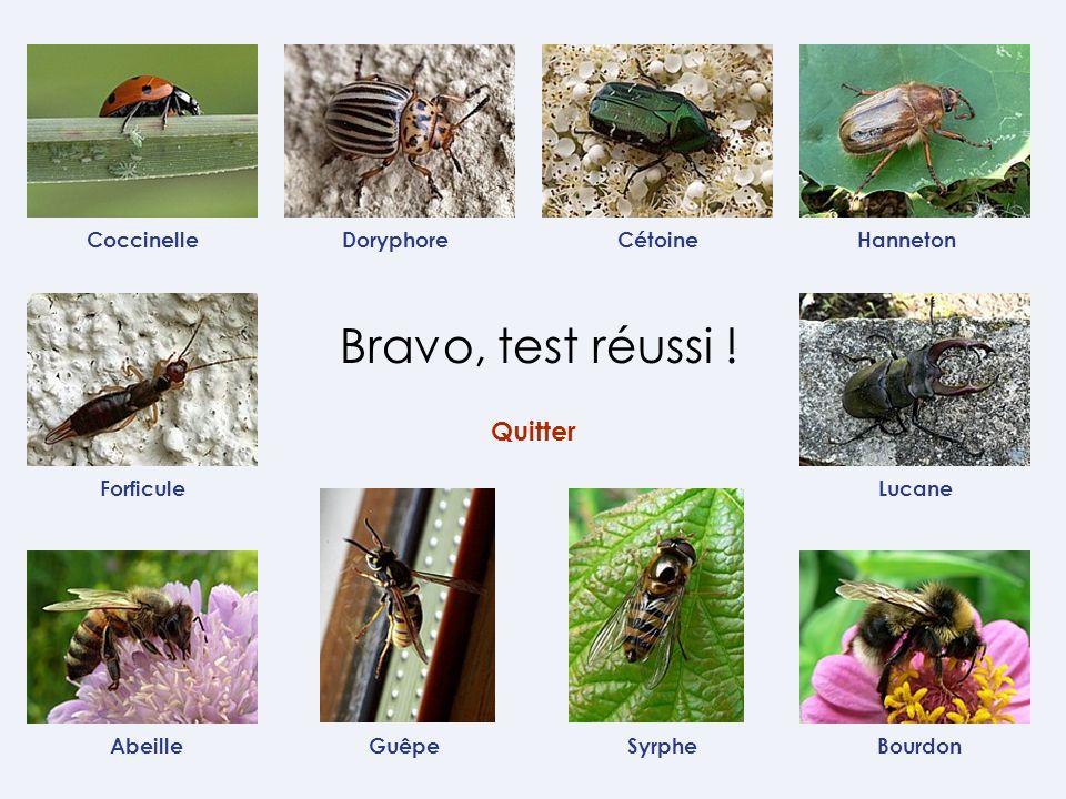 Coccinelle Forficule GuêpeAbeille CétoineHanneton Lucane Bourdon Doryphore Syrphe Bravo, test réussi ! Quitter