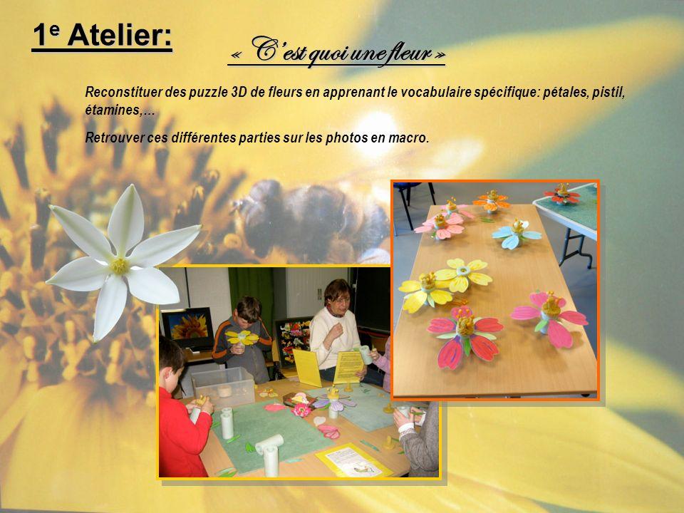 1 e Atelier: Reconstituer des puzzle 3D de fleurs en apprenant le vocabulaire spécifique: pétales, pistil, étamines,… Retrouver ces différentes partie